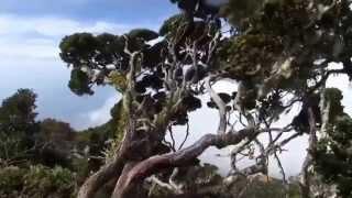 Download Lagu Lagu Dayak Kalimantan Barat : Pupu' Tagua mp3