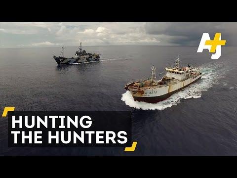 Sea Shepherd hunts illegal fishing boats