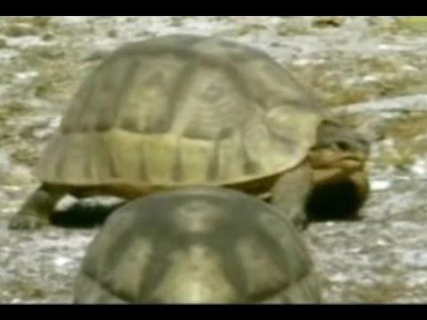 🐢 Naturwunder Schildkröte 🐢