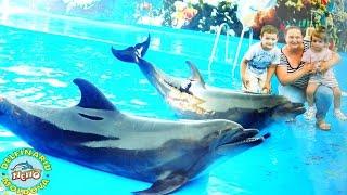 Дельфинарий НЕМО  Delfinariu NEMO Chișinău(Сегодня мы пришли в Дельфинарий Немо Нам очень понравилось тут Дельфинчики очень Умные и старательные..., 2016-08-02T07:04:46.000Z)