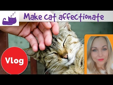 🐱-5-ways-to-make-your-cat-more-affectionate-🐱