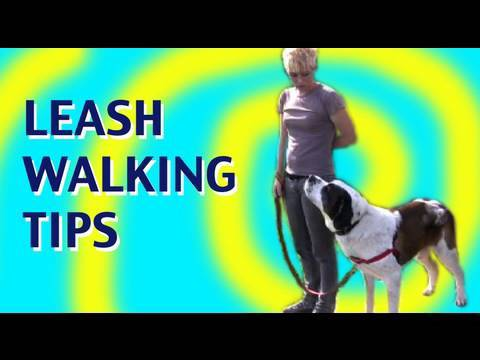 How to teach a dog not to pull on leash: Leash walking