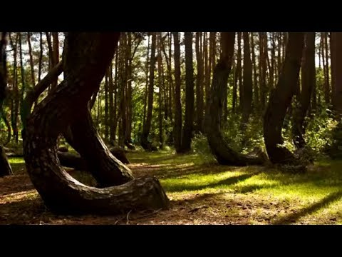 CREEPIEST Forests in the World