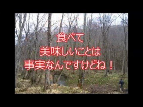 2016山菜・第1弾☆北海道行者にんにく(アイヌねぎ)