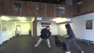 Developing Bite Work With Rottweiler! K9 Training, Northern Virginia, Dc, Maryland