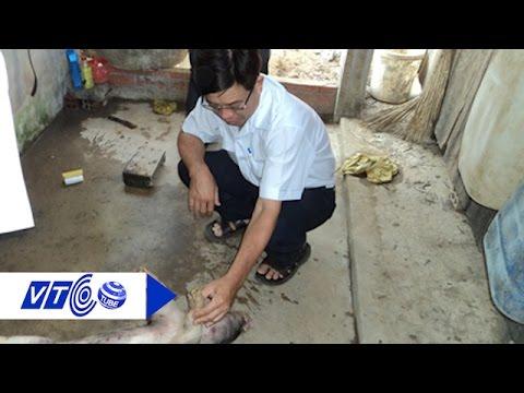 Điêu đứng vì heo chết do uống nước nhiễm mặn | VTC
