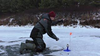 Вот что происходит когда оставляешь жерлицы на ночь без присмотра! Зимняя рыбалка 2020-2021.