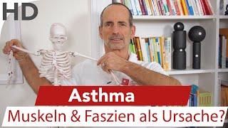 Asthma - Asthma Schmerzen, Husten am Modell erklärt / Faszien / Faszientraining