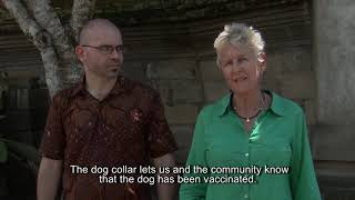Capture/Handling of Dogs for Mass Dog Vaccination-The Bali Method Part3-Vaccination, Collars, Safety
