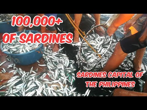 Fishing Sardines in the Sardines Capital of the Philippines