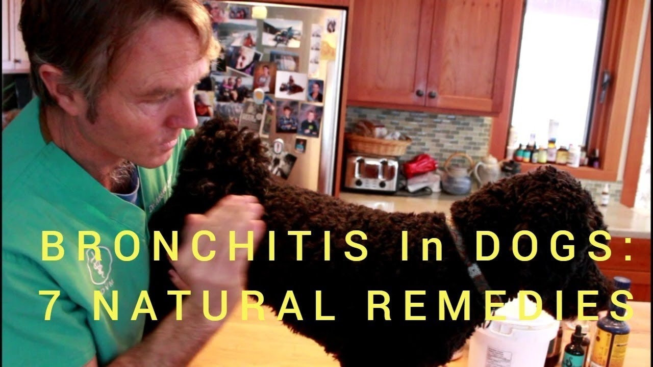 Bronchitis in Dogs: 7 Holistic Solutions