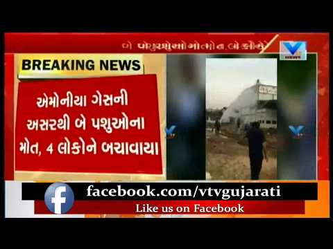 Gandhinagar: Ammonia Gas Leakage in Potato Cold Storage near Mansa; 2 Animals Died | Vtv