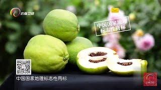 《七彩飘香》寻找最具云南特色的天然食材 品味白花木瓜发酵酒 20181208