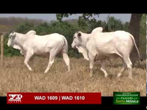 LOTE 63 - WAD 1609 | WAD 1610