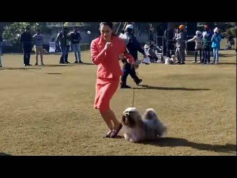 Dog Show Delhi 2018