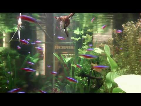 Download 8000+ Wallpaper Animasi Ikan Hidup HD Paling Keren