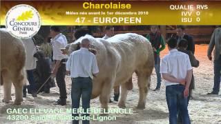 Concours race Charolaise (2/3)