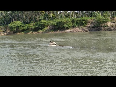 FRESH FISHING IN ACEH - INDONESIA RIVER