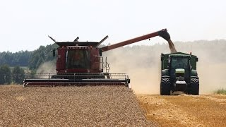 Żniwa 2014 - Case 7120 Axial-Flow vs pszenica ozima