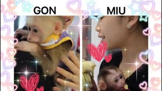 Visit the house of monkey GON