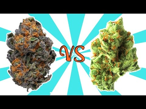 IS PURPLE WEED BETTER??? - (Weed Myths #2)