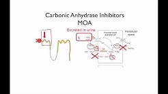 hqdefault - Carbonic Anhydrase Inhibitors In The Kidney