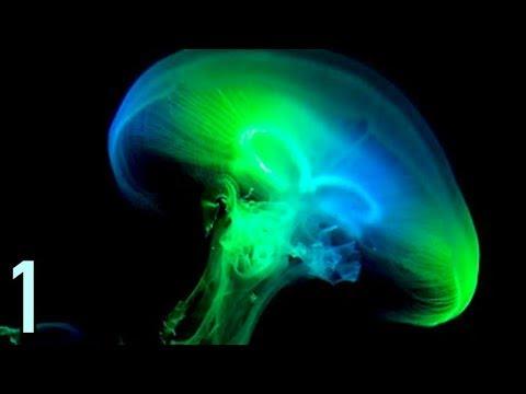 Descubren que muchísimos extraterrestres son fluorescentes (Parte 1)