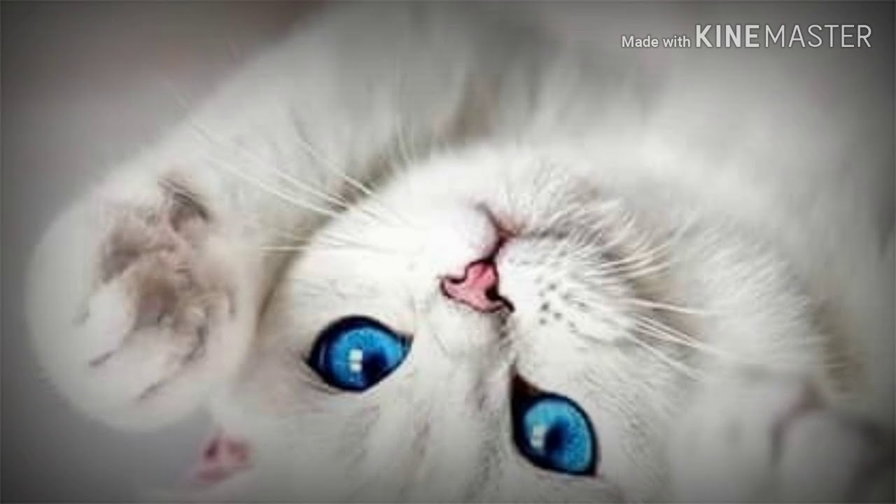 صور قطط كيوت 💖💖