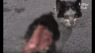 Stray Cat With A Severely Wounded Back (Part 1) | Kritter Klub