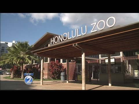 Honolulu Zoo Society lays out suggestions to improve business in quest for reaccreditation