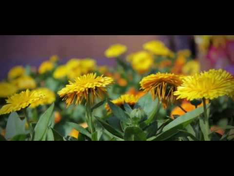 Canon 550D Video test - [HD 1080p]