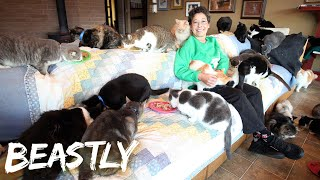 I Share My Home With 1000 Cats | BEASTLY