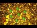 ডিম তড়কা | How To Make Egg Tadka - Bengali Restaurant Style Egg Tarka  Recipe | Easy Lentils Recipe