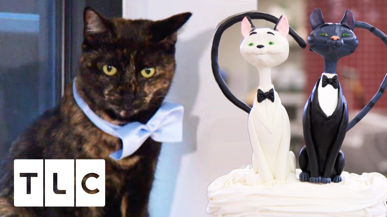A Cat Cake For Wedding Boss Season 9