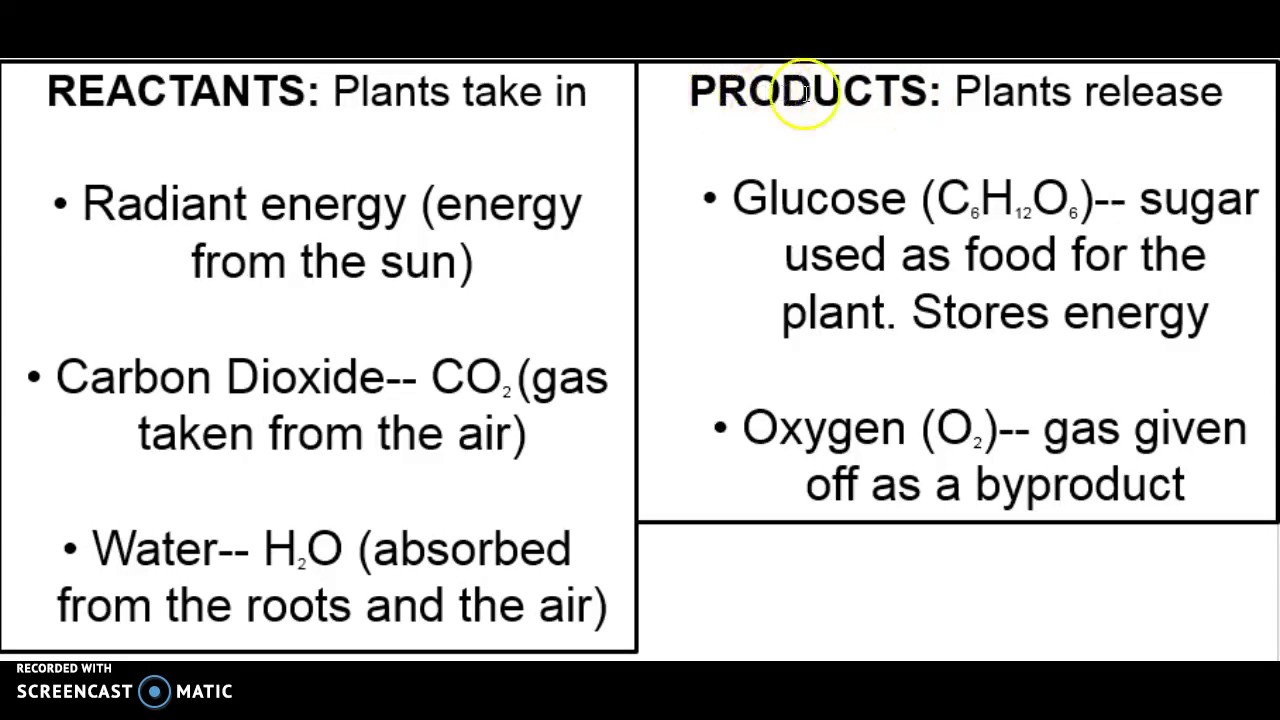 Products photosynthesis of reactants and