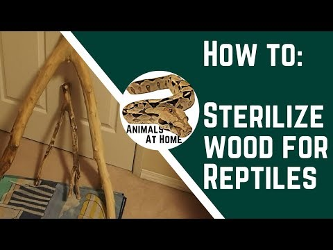 How to Sterilize Wood for Reptiles