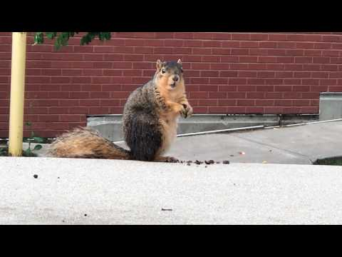Squirrel Appreciation Day 2018 | Rose-Hulman Institute of Technology