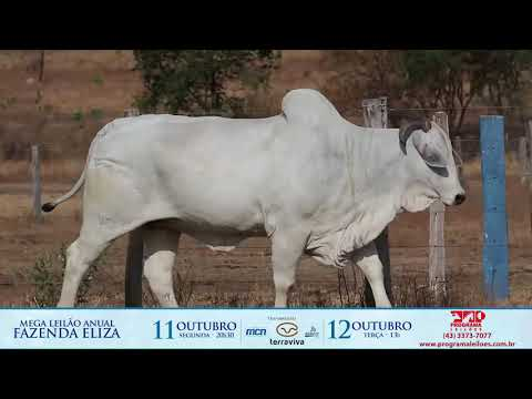 LOTE 200 1
