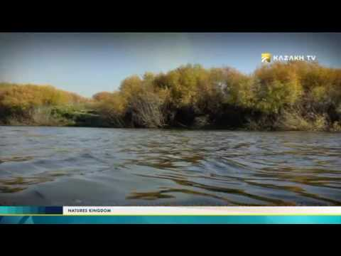 """Nature's kingdom"" №20 (27.11.2016) - Kazakh TV"