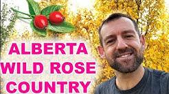 ALBERTA - WILD ROSE COUNTRY?