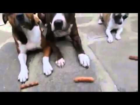Smart dog:)