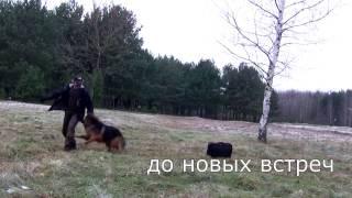[Урок 16] Как научить собаку возвращаться на МЕСТО
