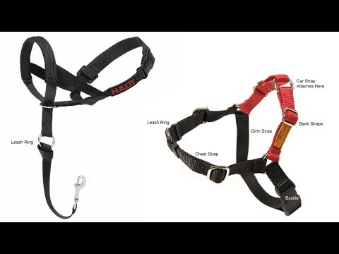Do No-Pull Dog Harnesses Really Work? Halti Head Halter and Wonder Walker Harness Demo