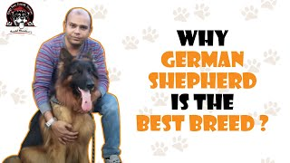 Why GERMAN SHEPHERD is the best breed ? | By Baadal Bhandaari | Call Now  9878474748