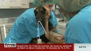 Pas si bêtes: l'anesthésie chez l'animal