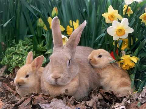 Happy Easter Day - YouTube