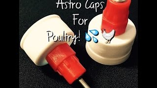 Astro Caps - Chicken Waterer Cap | The Urban Lady Bug
