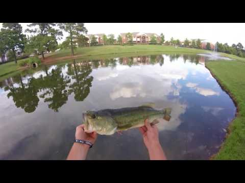 5 Dollar FISHING CHALLENGE (Best Day in a While)
