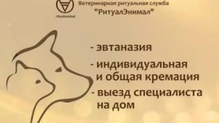 Кремация домашних животных в Челябинске. Ритуальные услуги для животных