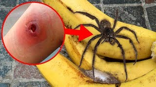 craziest-spiders-with-amazing-superpowers